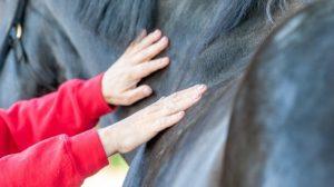 Cursus Paardenmassage