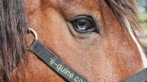 De cursus Paardenpsychologie