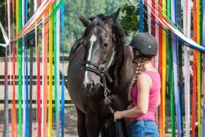 obstakeltraining paard