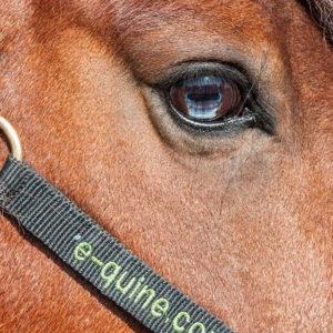 Paardenpsychologie cursus