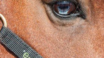 paardenpsychologie-cursus-product-min